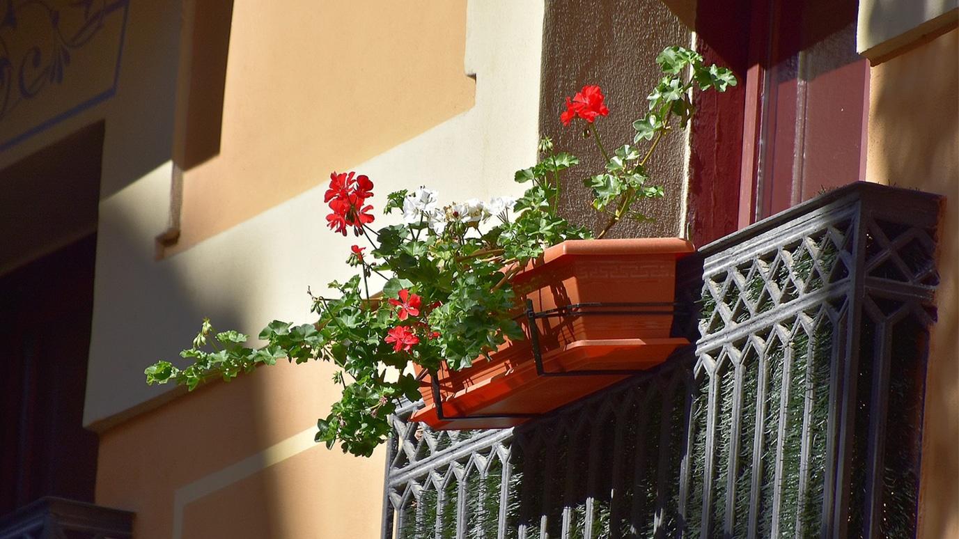 Flores en un balcón del casco viejo de Pamplona