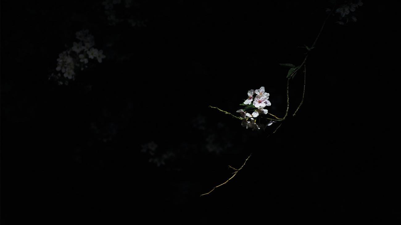 flor blanca que representa el perdón